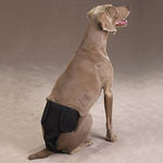 View Image 1 of Male Pup Pants