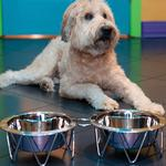 View Image 1 of Martinique Metal Pet Diner Set