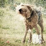 View Image 2 of Mud Dog Travel Towel by Kurgo - Green