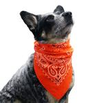 View Image 1 of Paisley Dog Bandana - Orange