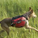 View Image 2 of Palisades Backcountry Dog Pack by RuffWear - Red Currant