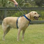 View Image 1 of Patento Pet Dog Harnesses and Leash - Red