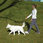 View Image 1 of Patento Pet Hands-Free Dog Leash