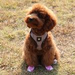 View Image 1 of P.B. Dog Shoes by Puppia - Baby Pink