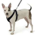 View Image 1 of Precision-Fit Nylon Dog Harness - Black