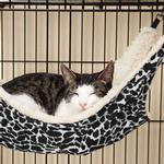 View Image 1 of ProSelect Wild Time Cage  Hammock Cat Bed - Black