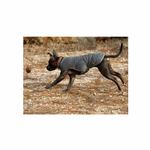 View Image 2 of Quinzee Insulated Dog Jacket by RuffWear - Granite Gray