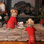 View Image 4 of Santa's Lil Helper Dog Pajamas