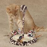 View Image 1 of Savvy Tabby Wild Time Chirping Teaser Cat Toy - Brown