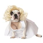 View Image 1 of Silver Screen Starlet Dog Costume