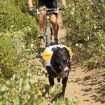 View Image 2 of Singletrak Hydration Dog Pack by RuffWear - Orange Sunset