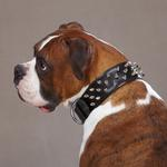 View Image 1 of Spiked Leather Dog Collar by Casual Canine