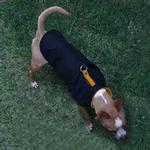 View Image 1 of Sports Dog Vest by Gooby - Black/Orange