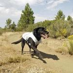 View Image 3 of Swamp Cooler Dog Cooling Vest by RuffWear - Ice Blue