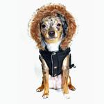 View Image 2 of Swiss Alpine Ski Dog Vest by Hip Doggie - Black