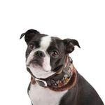 View Image 1 of Tessell Neckguard Dog Collar by Puppia - Brown