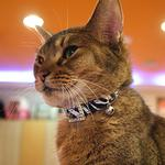 View Image 2 of Tigris Cat Collar by Catspia - Black
