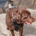 View Image 2 of Tru-Fit Dog Harness with Camera Mount by Kurgo