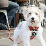 View Image 3 of Tru-Fit Dog Harness with Camera Mount by Kurgo