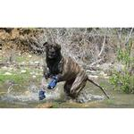 View Image 5 of Ultra Paws Cool Dog Boots - Blue