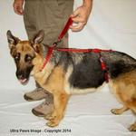 Ultra Paws Dog Heel Harness - Red