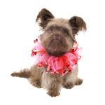 Valentine's Day Dog Scrunchy - Red