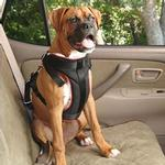 View Image 1 of Vehicle Safety Pet Harness