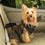 View Image 4 of Vehicle Safety Pet Harness