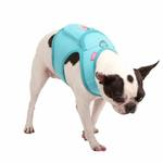 View Image 1 of Vera Pinka Dog Harness by Pinkaholic - Aqua