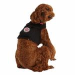 View Image 1 of Vera Pinka Dog Harness by Pinkaholic - Black