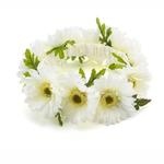 View Image 1 of Up Country Wedding Collection - Daisy Ring Dog Neckwear