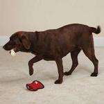 View Image 1 of Zanies Rawhiders Dog Toy - Red