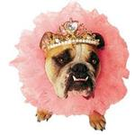 View Image 1 of Zelda Queen Halloween Dog Costume