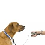 View Image 2 of Zip Lead Retractable Dog Leash by Planet Dog - Blue