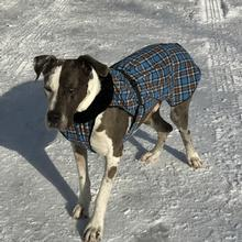 Alpine Flannel Dog Coat - Brown and Blue Plaid