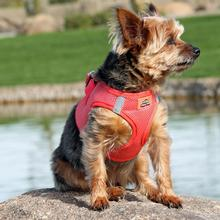 American River Ultra Choke-Free Mesh Dog Harness - Coral