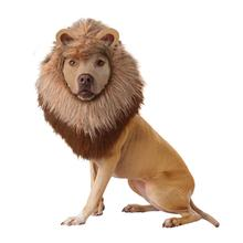 Animal Planet's Lion Halloween Dog Costume
