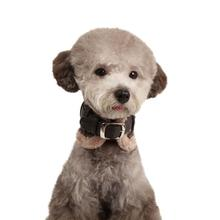 Barron Neckguard Dog Collar by Puppia - Gray