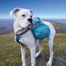 Baxter Dog Backpack by Kurgo - Coastal Blue