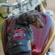 Biker Dawg Motorcycle Dog Jacket - Black