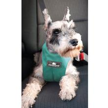 Clickit Sport Dog Harness by Sleepypod - Robin Egg Blue - Limited Edition