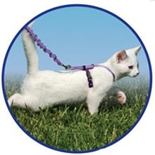 cat-harnesses