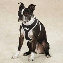 Halo Dog Harness by Dog is Good - Black