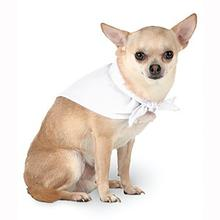 Blank Dog Bandana - White