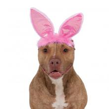Easter Bunny Ears Dog Costume Headpiece - Pink