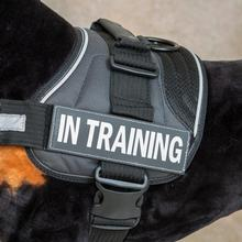 EzyDog Custom Side Patches for Convert Harness - In Training