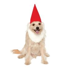 Garden Gnome Dog Hat With Beard