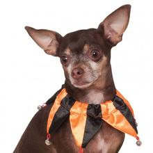 Halloween Jester Dog Collar Scrunchie