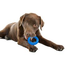 Hydro Ring Dog Toy