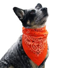 Paisley Dog Bandana - Orange